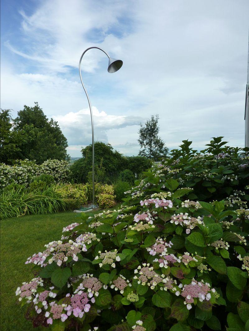 Offerta piante da interni e esterni-Occasione servizi specializzati giardini-Bearesi Giardini