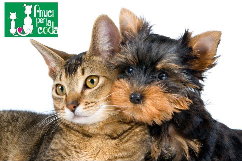 Offerta negozio articoli per cani e gatti Pistoia